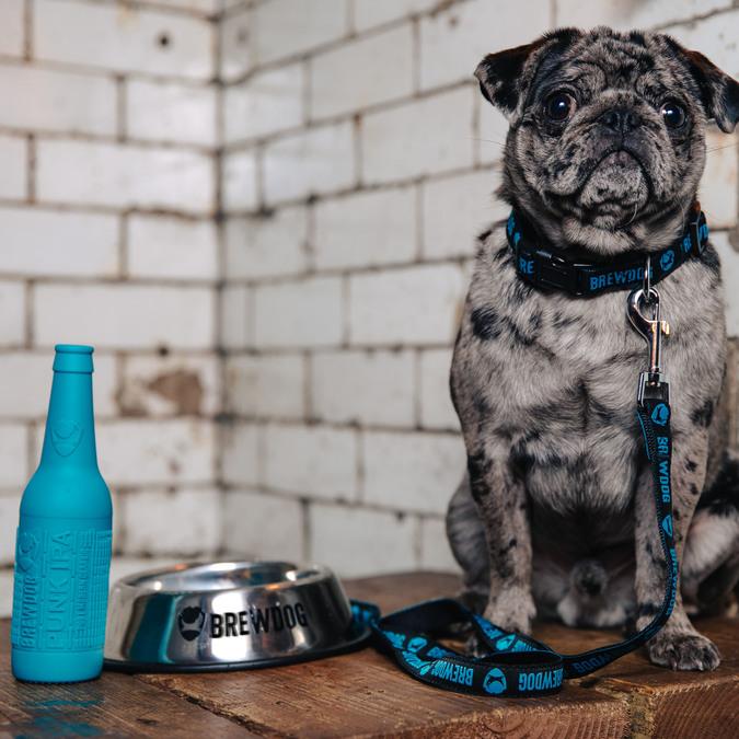 BrewDog Dog Pack